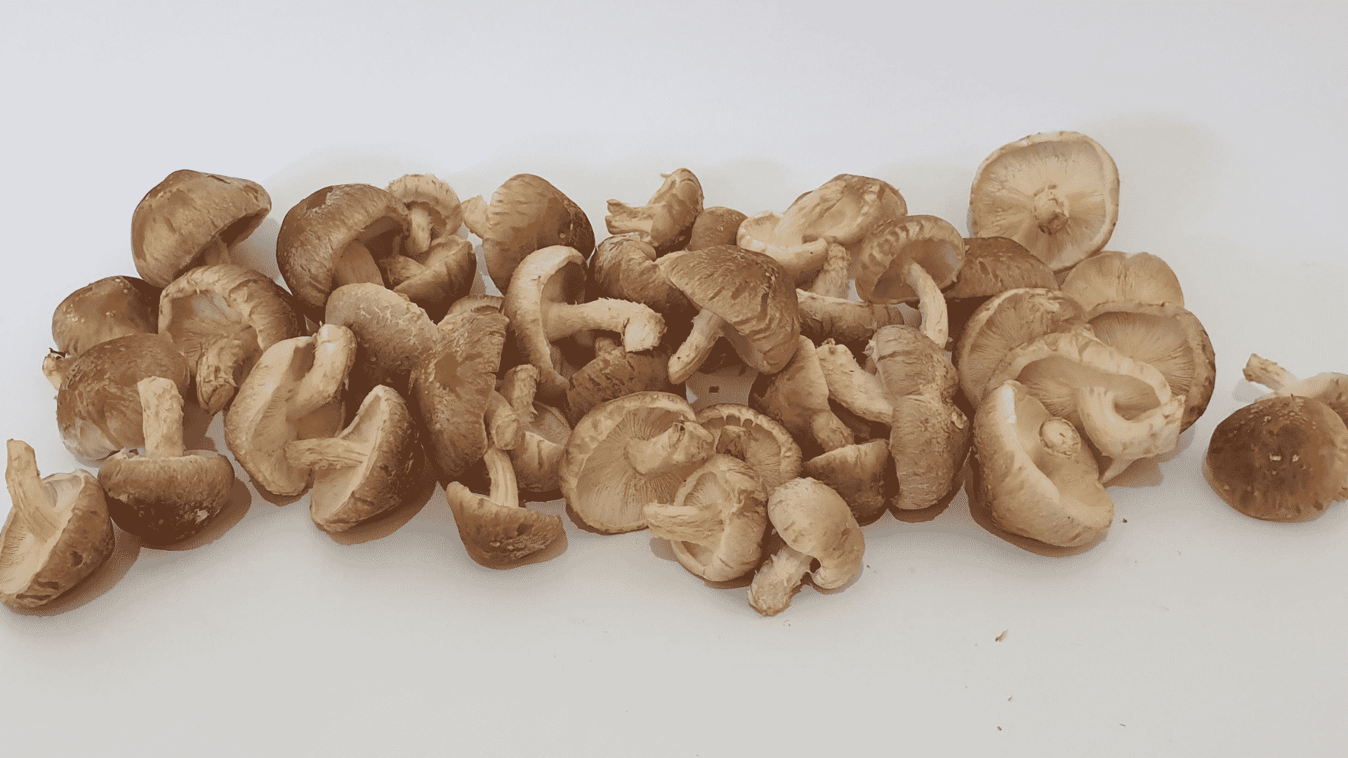 Introduction to mushroom cultivation – Subiaco